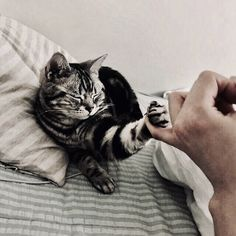 Cute Animals For Drawing since Cute Cat Poses Drawing yet Cute Black And White Cats And Kittens Animals And Pets, Baby Animals, Cute Animals, Animals Images, Wild Animals, National Cat Day, Cat Aesthetic, Aesthetic Japan, Aesthetic Colors