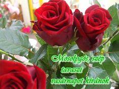 Vasárnap, - majornejulika Blogja - Anyák napja,Barát,Csajok,Csodás napot!,Csütörtök,Esős képek,fagyi,Festmények,Gyertyák,Hajdúböszörmény,Hétfő,idézetek,Idézetek,Jó éjszakát!,Jó reggelt!,Julikától,Kedd,kék rózsák,Kellemes délutánt!,kellemes hét végét!,Köszömöm,Ma,mesék,Mosoly,Névnapra,Nő napra,Ősz,Péntek,Pünkösd,Rózsák,Sütemények,Szép estét felíratok.,Szép hetet!,Szép képek,Szép napot!,Szerda,SZERETET,Szombat,Születésnapra,Tavasz,télapó,vasárnap,videó,Virág csendélet, Rose, Flowers, Plants, Blog, Good Morning, Pink, Blogging, Plant, Roses