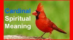 Cardinals Spiritual Meaning: Symbol Of Cardinal Birds, What It ...