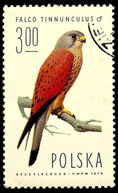 Common kestrel Falco Tinnunculus Bird -Handmade Framed Postage Stamp Art 18855