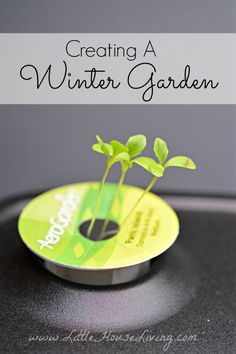 Planting a Winter Garden. Get started this weekend before it's spring.