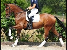 ▶ www.sporthorses-online.com 2010 Hanoverian gelding by Christ 17 hh for sale price range I - YouTube