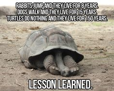 Tortoise but true.