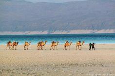 a caravan in beautiful somalia