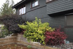 Here there are a few shrubs lining an elevated slope along the side of the house. This hides the change in elevation as well as integrating the house into the natural surroundings.