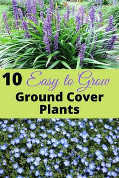 Finding Ground cover for full sun areas can be difficult. Give these plants a try! They produce abundant flowers and spread easily and quickly with little care. Outdoor Plants, Indoor Outdoor, Garden Tips, Garden Ideas, Flower Boxes, Flowers, Ground Cover Plants, Down South, Growing Plants