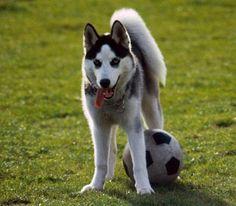 Cane e pallone
