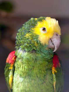 Papagei in der Vogelburg bei Weilrod - Flickr - Photo Sharing!
