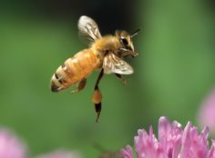 Pollination in action... it's a beautiful thing, so share the buzz!    http://wholefoodsmarket.com/sharethebuzz/
