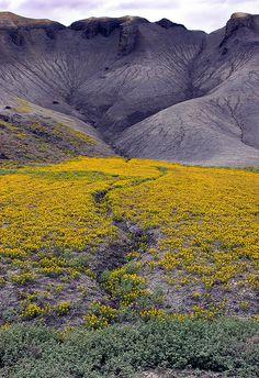 Erosion and Flowers at Capitol Reef National Park, Utah.  Taken by Rob Kroenert, via Flickr