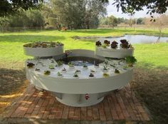 Useful targeted aquaponics design see this site Aquaponics Plants, Aquaponics System, Hydroponics, Cool Things To Make, Things To Come, Nitrogen Cycle, Blue Delphinium, Plant Growth, Cut Flowers