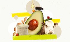 Why you should go animal-free: 18 arguments for eating meat debunked | Environment | The Guardian