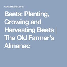 Beets: Planting, Growing and Harvesting Beets | The Old Farmer's Almanac