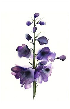 Delphinium watercolor PRINT- large 11 x 17 by amberalexander on Etsy  https    db40e6944ef