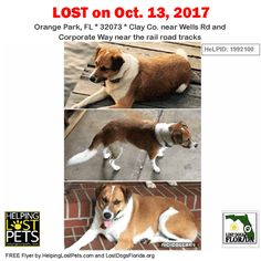 Please spread the word! Doucie was last seen near Wells Rd & Corporate Way in #OrangePark. Female tan/white #Mix / #ShetlandSheepdogSheltie Mix. Contact: Phone: (904) 327-3698 #LostDog  Medical: Shaved leg from recent surgery  More info photos dog's location on the HeLP map and to Contact: http://ift.tt/2gl0GCc  #LostDogsFlorida #HelpingLostPets