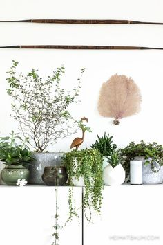 Urban Jungle Bloggers: My Plant Gang by @heimatbaumcom