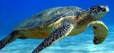 Parco marino di Nosy Tanikely, un'avventura tutta per single!