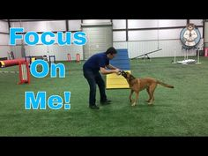 Focus On Me! - Jazz Up and Settle Down #MinWinDog - YouTube