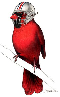 Cardinal in an Ohio State Football Helmet A4 Print by birdsinhats, £10.00