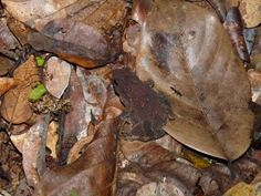 Camouflaged toad
