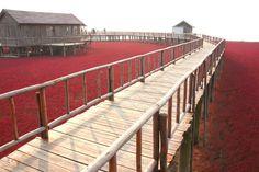 Chinese wetland has beachgoers seeing red