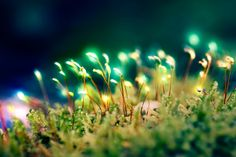 magic lights. by Altingfest.deviantart.com on @deviantART