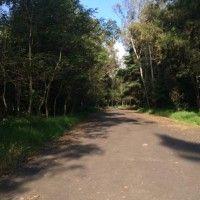 El Bosque de Tlalpan, opción ecológica para disfrute de visitantes
