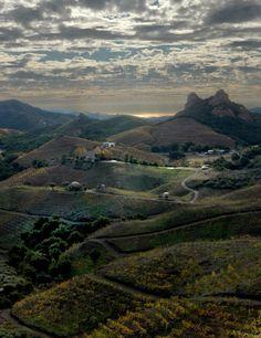 Saddlerock Vineyards of Malibu Family Wines