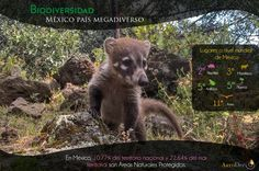 #México #Biodiversidad