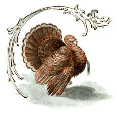 Public Domain Turkey Image. Nice for Thanksgiving