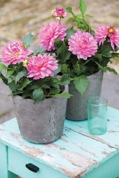 As small or large as your balcony or patio may be, flower bulbs will always make it look inviting. Garden Bulbs, Summer Plants, Bulb Flowers, Antique Decor, Types Of Flowers, Garden Inspiration, Aqua Blue, House Plants, Outdoor Gardens