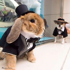 This Japanese bunny has more style than most humans! - Tweboo