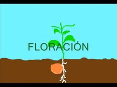 Ciclo de vida de una planta Elementary Science, Science For Kids, Science And Nature, Ap Spanish, Learning Spanish, The Kissing Hand, All About Plants, Plant Science, Project Based Learning