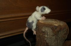 Realistic Needle Felted Dumbo Rat Pocket by HonoringWilderness