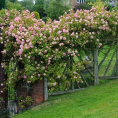 roses on the roof moosey 39 s country garden fence. Black Bedroom Furniture Sets. Home Design Ideas