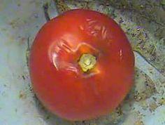 Time-lapse: Tomato decaying
