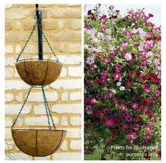 Double Hanging Basket by Thompson & Morgan £4.99  http://www.maillife.co.uk/p/thompson-morgan-double-hanging-basket-tam495?utm_medium=social_source=pinterest_name=clearance_content=hangingbasket=social_pinterest