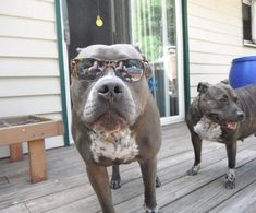 Hero Pit Bull Alerts Sleeping Family To House Fire Just In Time - The Dodo #pitbull
