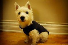 Turn Fleece Sweatpants Into Dog Sweater