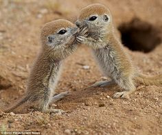 Wait. Hold still, let me see. Could be an eyelash...Baby Ground Squirrels