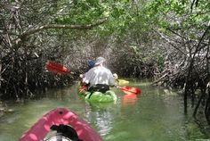 Mangrove Info Center #Bonaire
