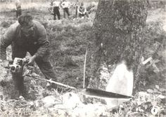 Putting a Dolmar CP chainsaw to use in the field. Circa 1950s.