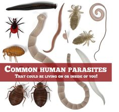 Some common human parasites that could be living in you or on you at this moment. Cellular Level, Creepy, Posts, In This Moment, Health, Messages, Health Care, Salud