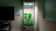 7Sensors Grow Box will automatically care for your plants from produce to pot #Startups #Tech
