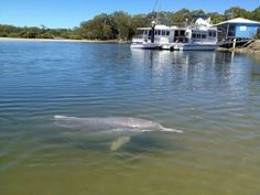 Gympie Cooloola Tourism · Discover The Gympie Cooloola Region Rainbow Beach Qld, Bareboat Charter, Fraser Island, Queensland Australia, Beach Scenes, Sunshine Coast, Tourism, Houseboats, Family Holiday