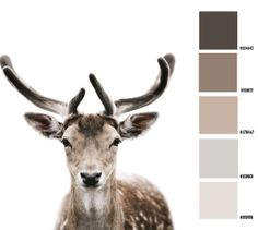 Color choice Greige #greige #colorpalette