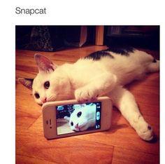 cat taking selfie