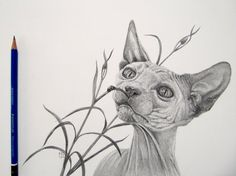 Sphynx in graphite by mo62.deviantart.com on @DeviantArt