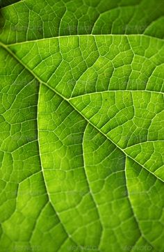 Download From $1 http://photodune.net/item/green-leaf/6282336