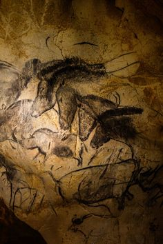 Picture of: Chauvet Cave